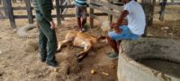 Violan a vaca de Miguel Borja