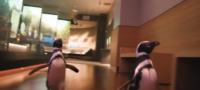 Pingüinos se escapan de su hábitat para ver a los dinosaurios