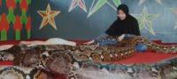 Adolescente adopta a seis pitones como mascota en Indonesia