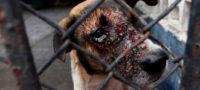 Proponen aumentar castigo hasta 4 años de cárcel por maltrato animal en EdoMex; Morena