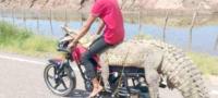 Adolescentes podrían ir a la cárcel por atrapar un cocodrilo en Sinaloa