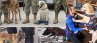 Perritos rescatistas: Frida, Ecko, Alex y Evil dieron esperanza tras el sismo del 19S del 2017 en México