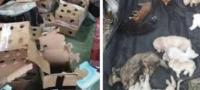 Hallan 5 mil perros y gatos sin vida en un almacén en China