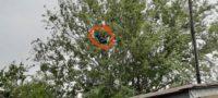 Hombre se 'trepa' a un árbol de 5 metros y huye de policías: amenazó de navajear a su familia en Piedras Negras