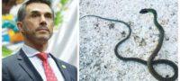 Diputado de Morena, Sergio Mayer es mordido por serpiente