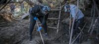 Encuentran más de 59 cuerpos en fosas clandestinas en Guanajuato; la mayoría eran menores de edad