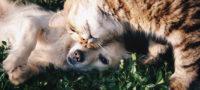 Mascotas podrían ser un derecho de los niños en Coahuila