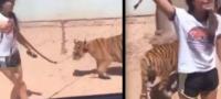 Niña pasea a un tigre por las calles de Sinaloa como si se tratara de un perro