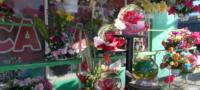 Venta de flores par el Día de Muertos disminuyeron hasta un 90%