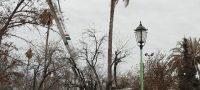 Realizan reforestación en plazas de Frontera