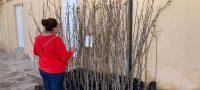 """Inicia San Buenaventura campaña de reforestación """"Menos concreto, más árboles"""""""