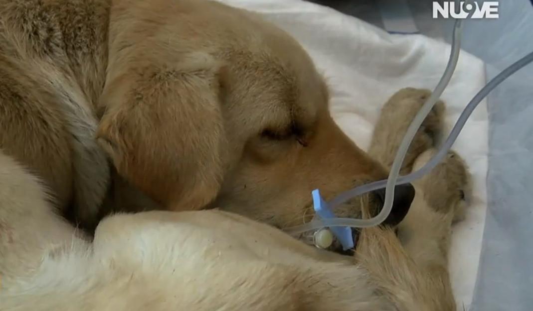 Confinamiento acrecienta el maltrato hacia los perros