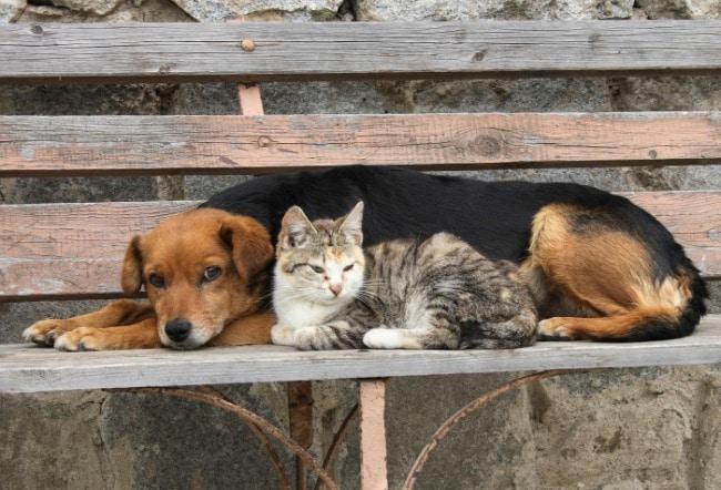 Hallan muertos por intoxicación a varios ejemplares de perros y gatos