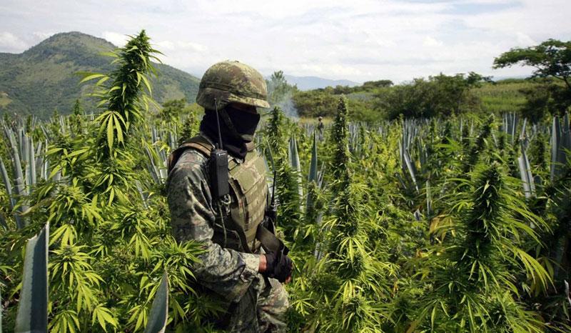 México, EE.UU. y Colombia se unirán contra el tráfico de drogas