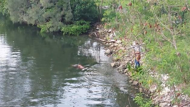 Reforzaran la vigilancia en la Laguna el Carpintero, tras ataque de cocodrilo