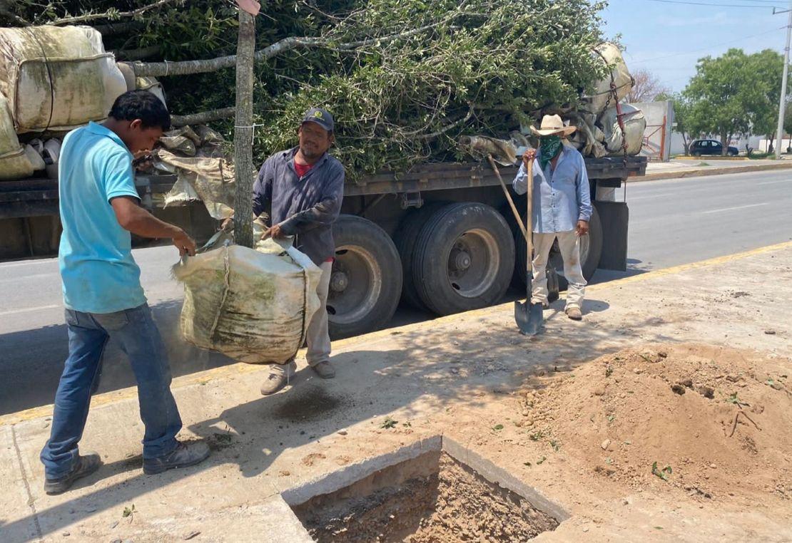 Continúa en San Buenaventura la reforestación del Bulevar Magisterio
