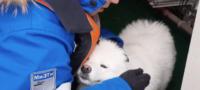 Rompehielos ruso rescata a perrito perdido en el Ártico