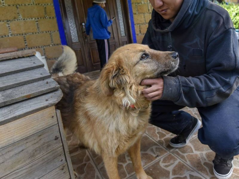 Terapia asistida con animales: ¿factible para prevenir suicidios?