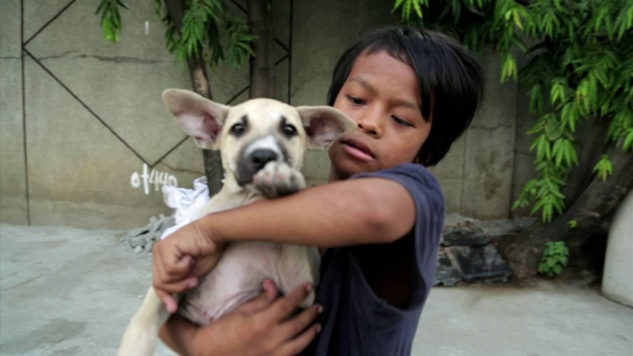 Niño de 11 años vive en la calle con su perrito: Es su única compañía