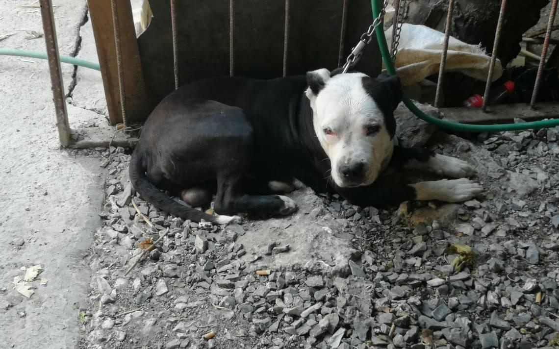 Perro atacó a mujer en Coahuila; le causó heridas en la cara, brazos y espalda