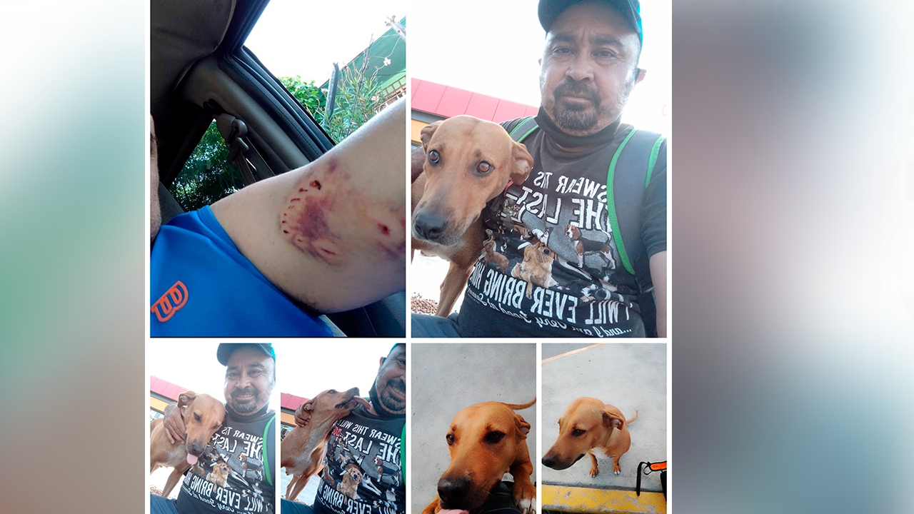 Me mordió y yo le pagué con amor: el Tío Jaime rescató a perrita de la calle y se volvió viral