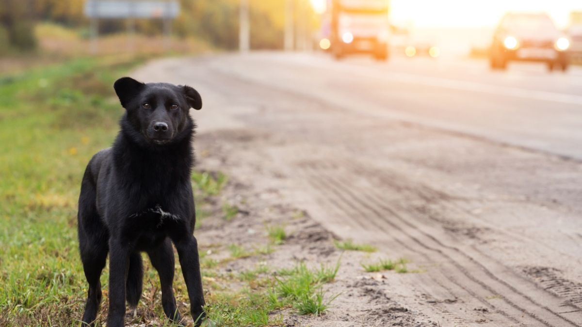 Mujer prefirió volcar su auto que atropellar a un perrito en Coahuila