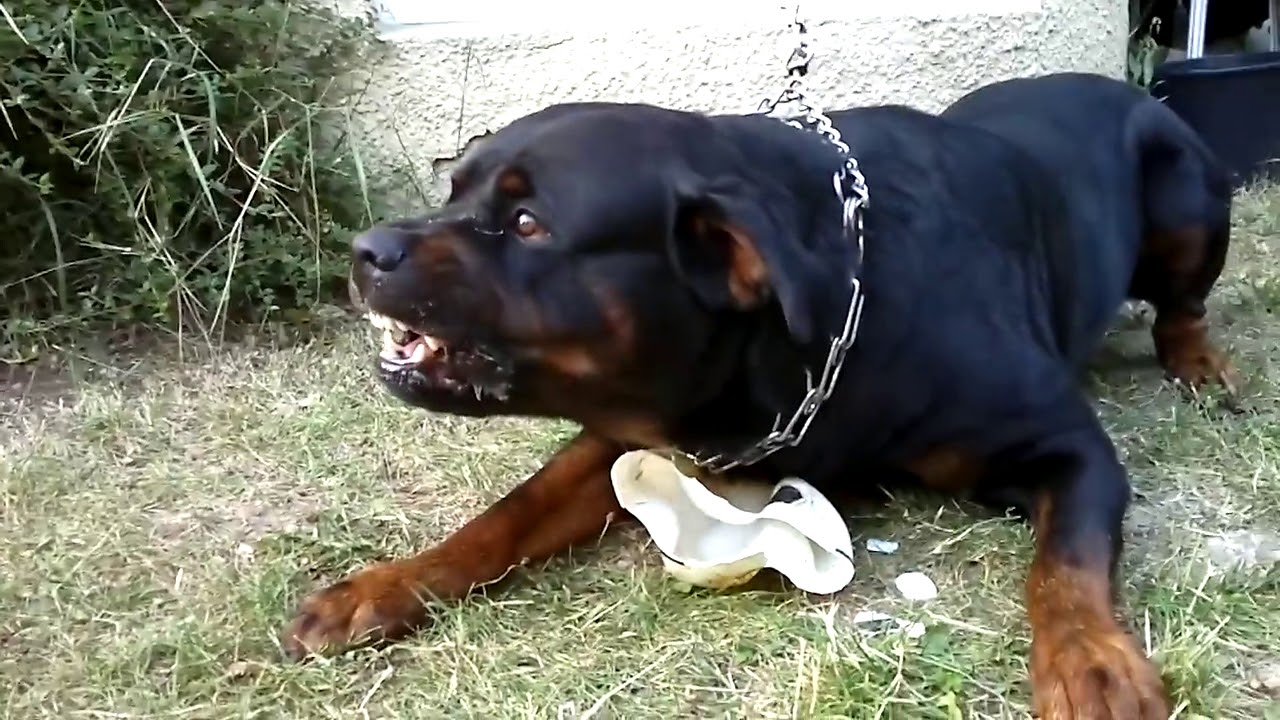 Abuelito fue mordido por un perro en Coahuila: Denuncian que dueña del can no se hizo responsable por las heridas