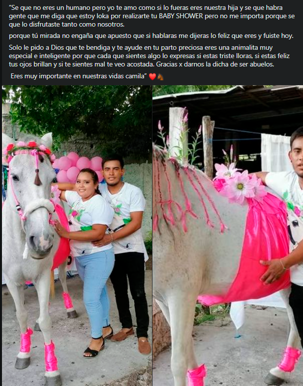 Pareja le hizo baby shower a su yegua: 'Gracias por darnos la dicha de ser abuelos'